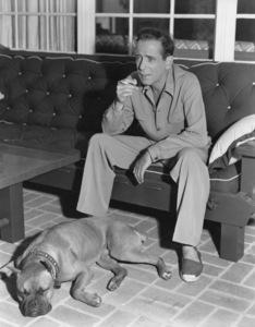 Humphrey Bogart with his pet boxer at home circa 1949 - Image 0015_0125