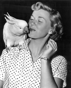 "Doris DayOn the Set of ""Young Man With a Horn""With Louise, a cockatoo 1950 - Image 0025_0022"
