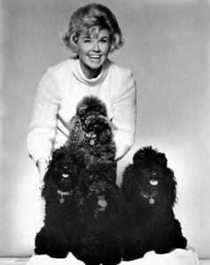 Doris Day with her pet poodlescirca 1965**I.V. - Image 0025_2353