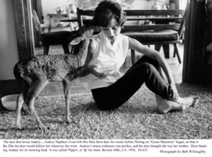 Audrey Hepburn with pet Pippin, 1958. © 1978 Bob Willoughby - Image 0033_1115