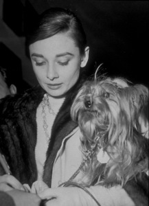 """Audrey Hepburn and dog, Famous, arriving in Rome to film """"The Nun"""