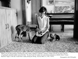Audrey Hepburn with pets Pippin and Famous, 1958. © 1978 Bob Willoughby - Image 0033_2315