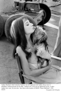 """""""Green Mansions""""Audrey Hepburn with pet Famous.1958 / MGM(c) 1978 Bob Willoughby - Image 0033_2354"""