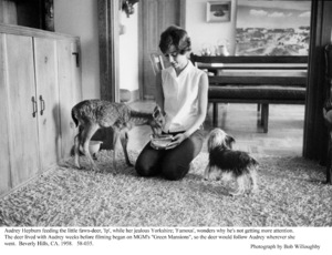 Audrey Hepburn with pets Famous and Pipping, 1958. © 1978 Bob Willoughby - Image 0033_4016