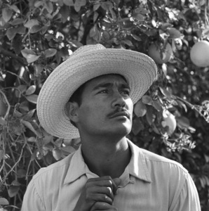 """Mexican Braceros (""""Helping Hands from Mexico"""" - The Saturday Evening Post - August 10, 1957 - volume 230, number 6)Portrait of Rafael Tamayo1957© 1978 Sid Avery - Image 0063_0028"""
