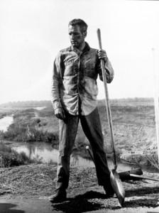 "Paul Newman in""Cool Hand Luke.""1967 Warner - Image 0070_0786"
