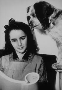 """Elizabeth Taylor reading her lines between scenes for """"National Velvet""""1944**R.C.MPTV - Image 0712_0053"""