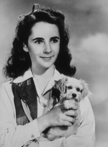Elizabeth TaylorC. 1946**R.C.MPTV - Image 0712_0106