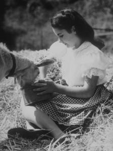 Elizabeth Taylor 1943 © 1978 John EngsteadMPTV - Image 0712_2311