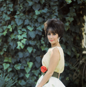 Elizabeth Taylor Elizabeth Taylor wearing