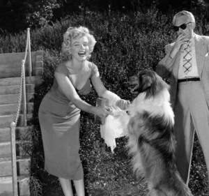 """Marilyn Monroe with Lassie at a Hollywood Party in which Ray Anthonyunveiled the musical homage """"Marilyn""""August 1952.  - Image 0758_0836"""
