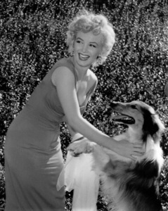 """Marilyn Monroe with Lassie at aHollywood Party in which Ray Anthonyunveiled the musical homage """"Marilyn"""" August 1952. **I.V. - Image 0758_0848"""