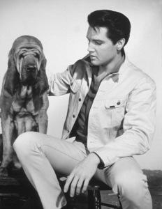 "Elvis PresleyPublicity photo for ""Kissin"