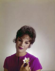 Mary Ann Mobley1967© 1978 Gene Howard - Image 10068_0001