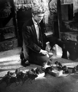 """Willard""Bruce Davidson1971 Cinerama - Image 10906_0009"