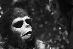 """Planet of the Apes"" Roddy McDowall1974© 1978 Wynn Hammer - Image 1152_0032"