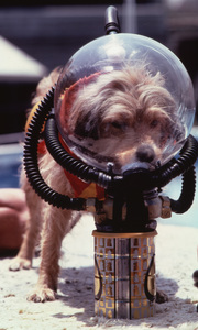Benji filming scene for a TV specialcirca 1981** H.L. - Image 12042_0005