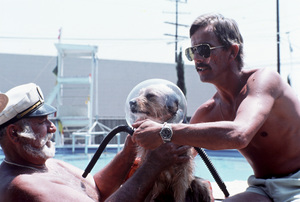 Benji with Trainer Frank Inn (cap) and an assistant filming scene for a TV specialcirca 1981** H.L. - Image 12042_0012