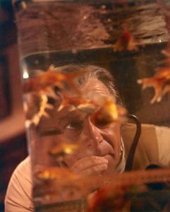 """Dr. Doolittle"" Rex Harrison 1967 © 1978 Ted Allan"