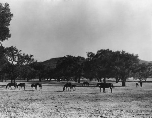Los Angeles Historical Thousand Oaks, CA 1937 © 1978 Max Tatch - Image 13480_0050
