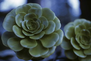 California Wild Flowerscirca 1960s© 1978 Sid Avery - Image 13675_0027