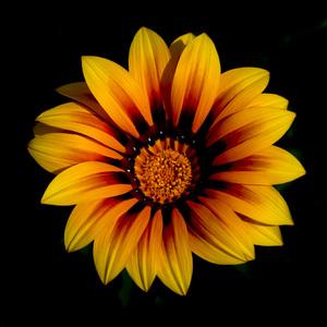 Flowerscirca 2000s© 2000 Joe Webster - Image 13675_0030