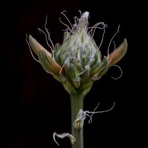 Flowerscirca 2000s© 2000 Joe Webster - Image 13675_0031
