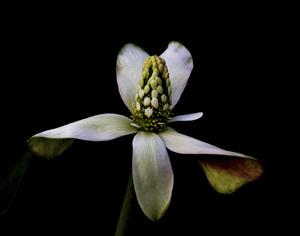Flowerscirca 2000s© 2000 Joe Webster - Image 13675_0032