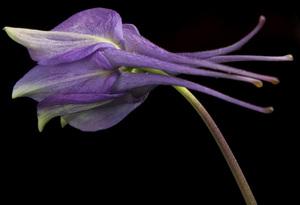 Flowerscirca 2000s© 2000 Joe Webster - Image 13675_0033