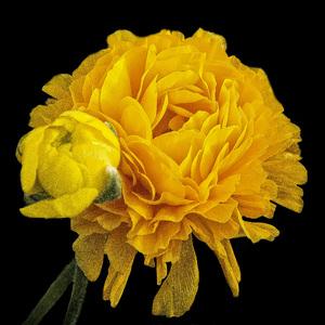 Flowerscirca 2000s© 2000 Joe Webster - Image 13675_0034