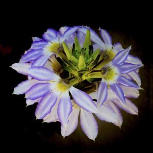 Flowerscirca 2000s© 2000 Joe Webster - Image 13675_0036