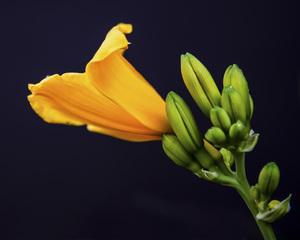 Flowerscirca 2000s© 2000 Joe Webster - Image 13675_0038