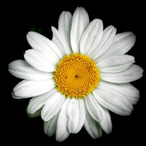Flowerscirca 2000s© 2000 Joe Webster - Image 13675_0039