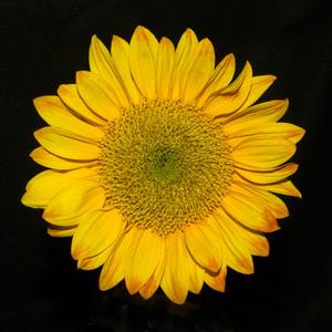 Flowerscirca 2000s© 2000 Joe Webster - Image 13675_0040