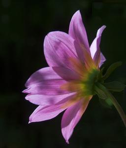 Flowerscirca 2000s© 2000 Joe Webster - Image 13675_0041