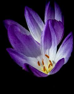 Flowerscirca 2000s© 2000 Joe Webster - Image 13675_0042