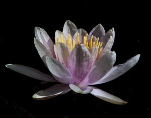 Flowerscirca 2000s© 2000 Joe Webster - Image 13675_0044