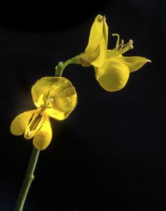 Flowerscirca 2000s© 2000 Joe Webster - Image 13675_0045
