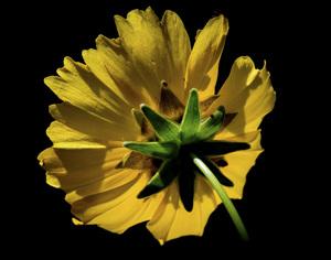 Flowerscirca 2000s© 2000 Joe Webster - Image 13675_0046