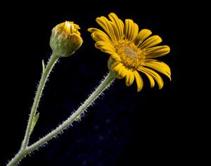 Flowerscirca 2000s© 2000 Joe Webster - Image 13675_0048