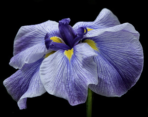 Flowerscirca 2000s© 2000 Joe Webster - Image 13675_0049