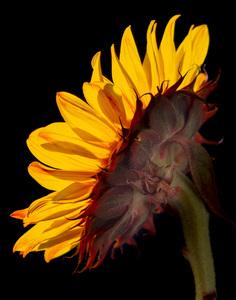 Flowerscirca 2000s© 2000 Joe Webster - Image 13675_0051