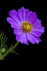 Flowerscirca 2000s© 2000 Joe Webster - Image 13675_0052