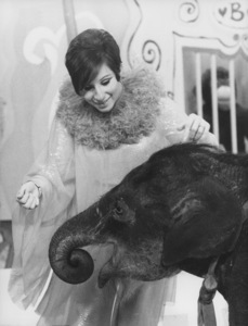 """Barbra Streisand shares a big scene with a baby elephant in """"Color Me Barbra"""" 1966 - Image 13747_0002"""