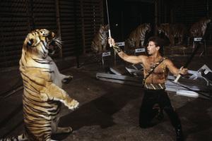 "Lorenzo Lamas on ""The 11th Annual Circus of the Stars""1986© 1986 Gene Trindl - Image 14167_0022"