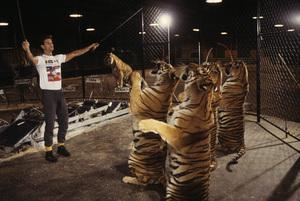 "Lorenzo Lamas on ""The 11th Annual Circus of the Stars""1986© 1986 Gene Trindl - Image 14167_0024"
