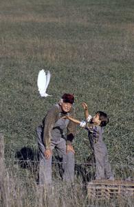"""Where Pigeons Go to Die""Art Carney 1990© 1990 Gene Trindl** H.L. - Image 14642_0012"