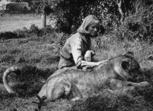 """Born Free,""Virginia McKenna with Lioness1966 / Columbia © 1978 John Jay - Image 16286_0004"