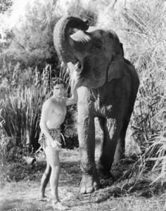 """""""Tarzan the Fearless"""" Buster Crabbe1933 Principal **I.V. - Image 19903_0002"""