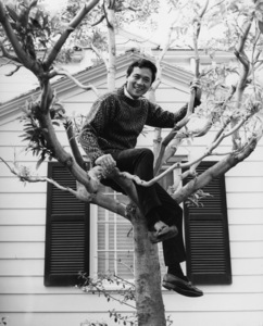 James Shigeta in tree at his Georgian-Colonial home on top of the Hollywood Hillscirca 1956Photo by Joe Shere - Image 21096_0002